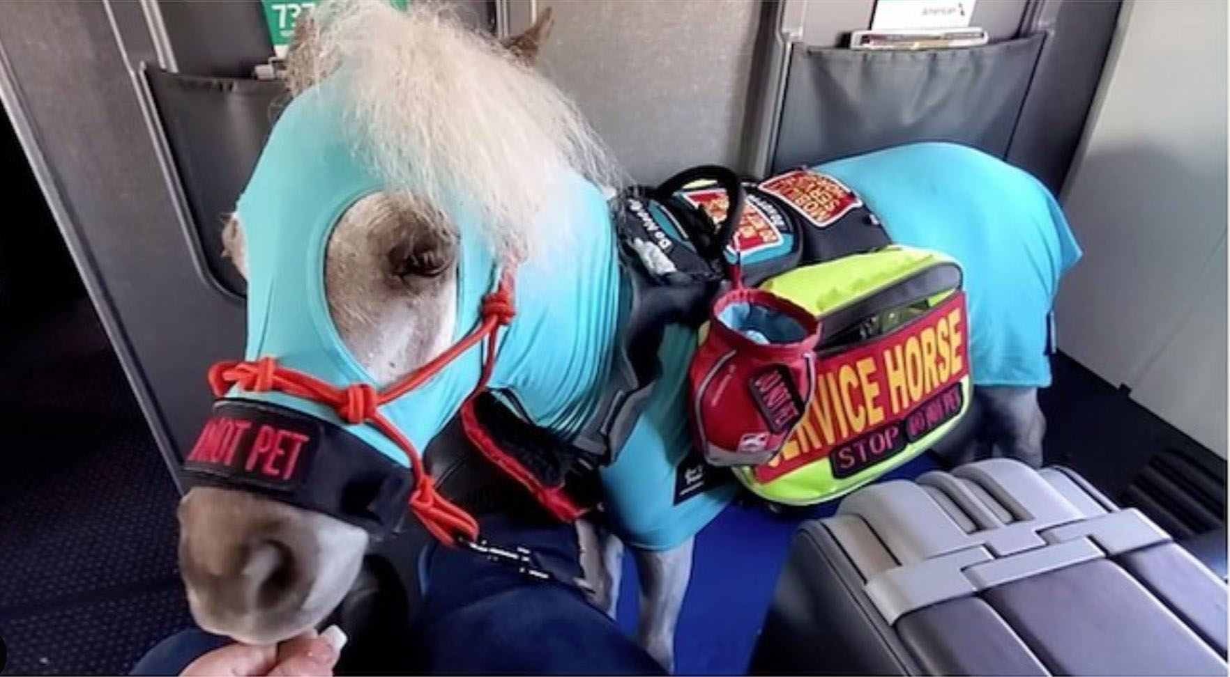 038-preview-airplane-emotional-support-horse