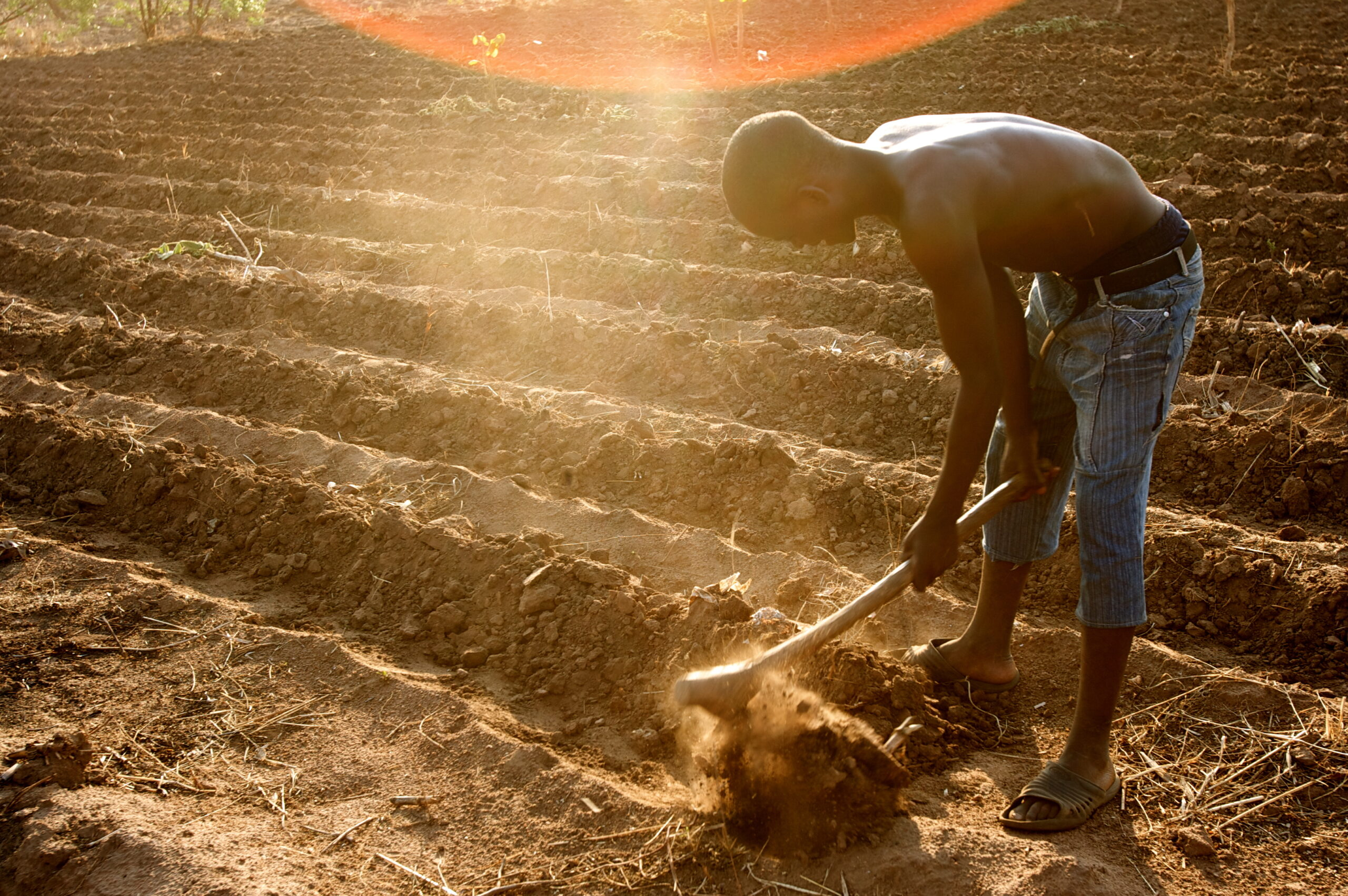 Farming lures back young people in Africa