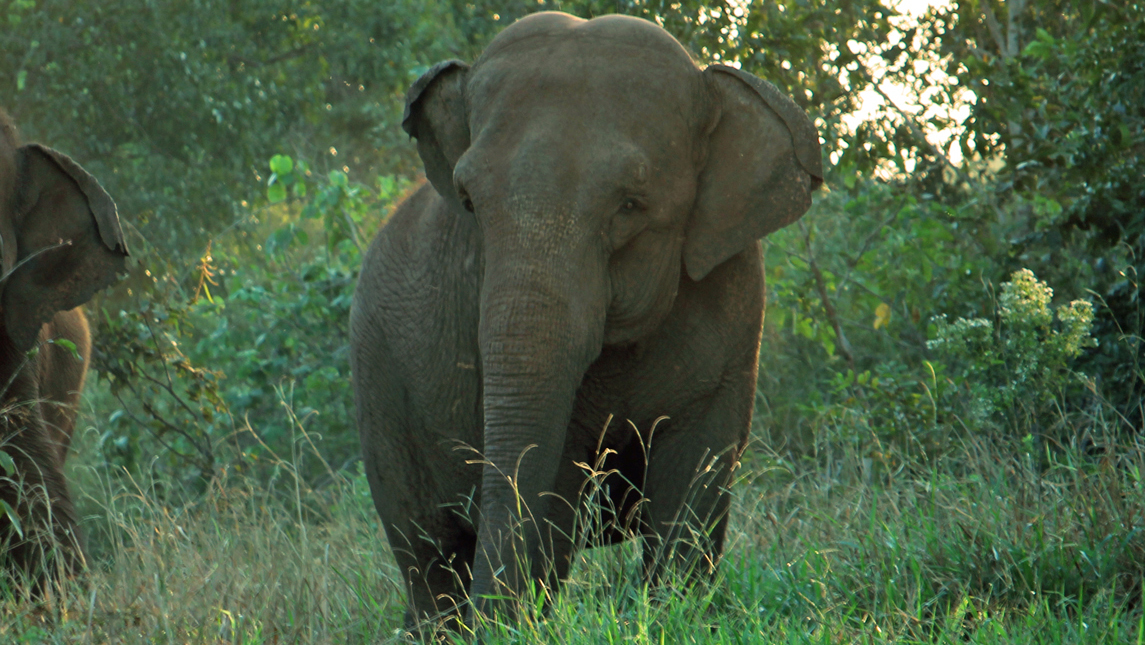 MEET AN ANIMAL:  Mara the elephant found sanctuary after 50 years in circuses and zoos