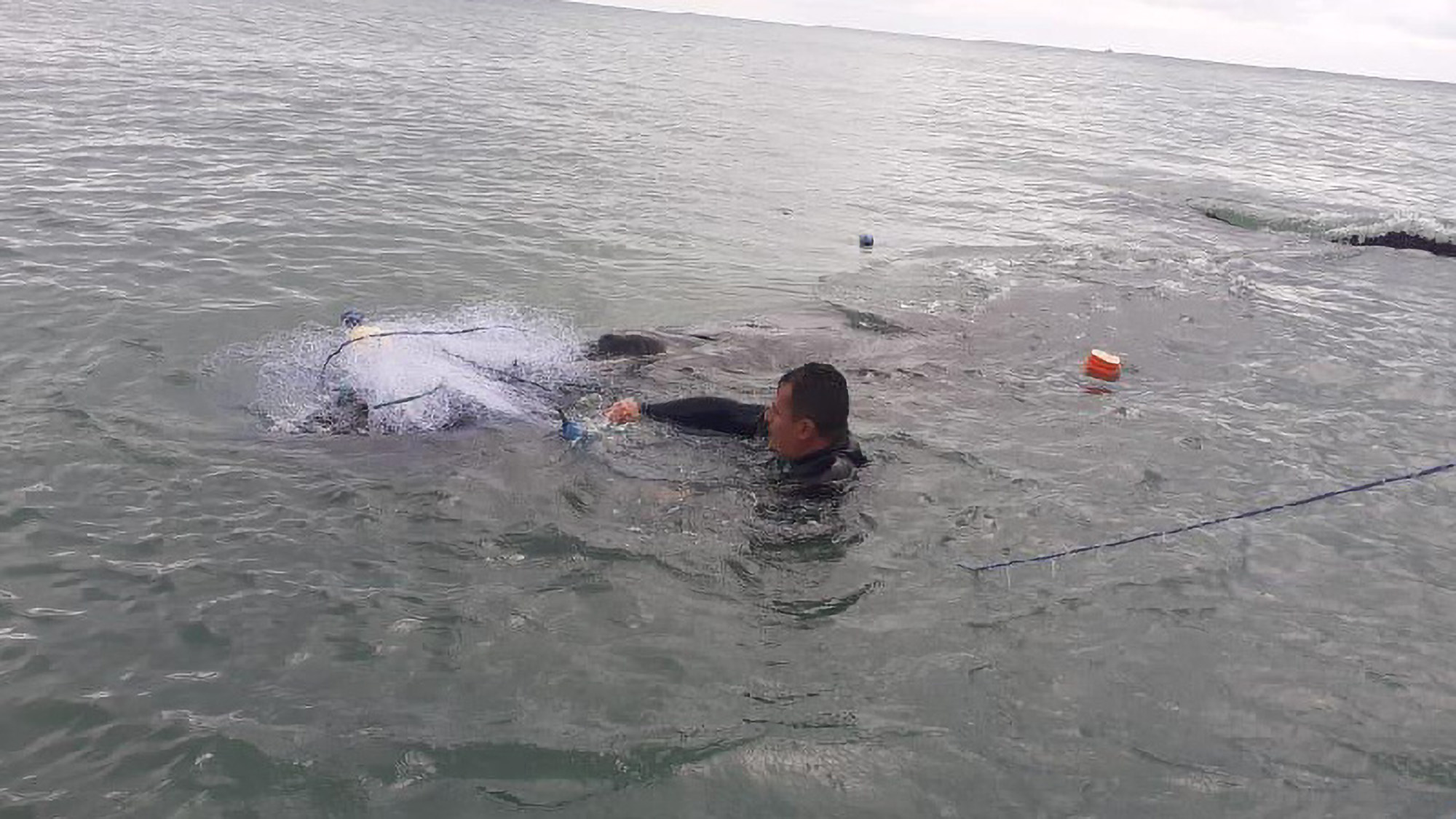 Humpback whale freed from abandoned fishing net