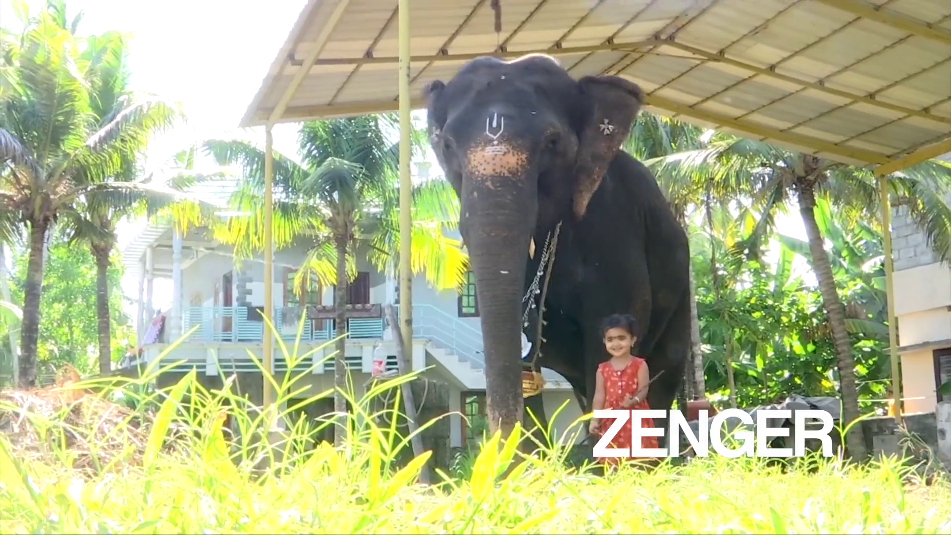 VIDEO: Little girl and 35-year-old elephant develop unlikely friendship