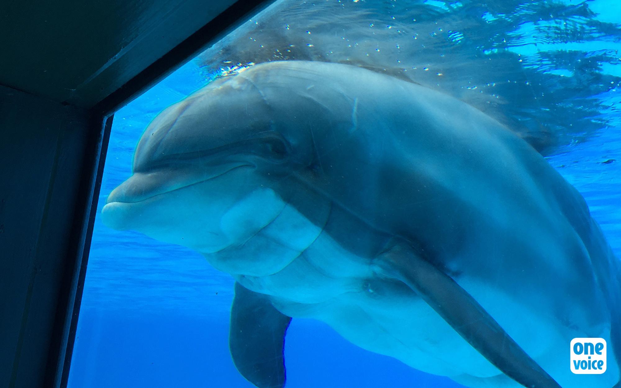 France to Ban Animal Fur, Circuses and Marine Captivity