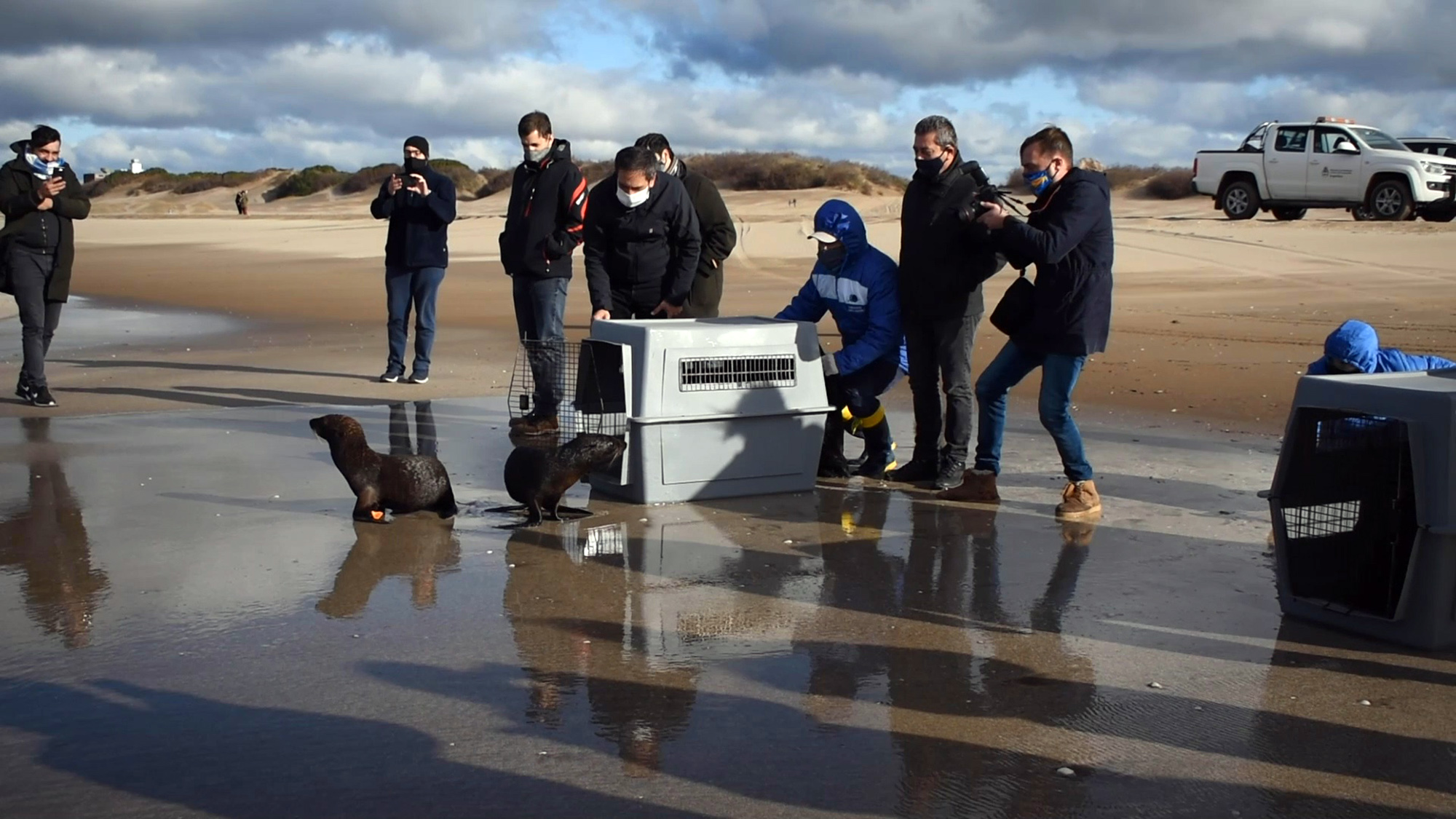 Stranded seals find their way home