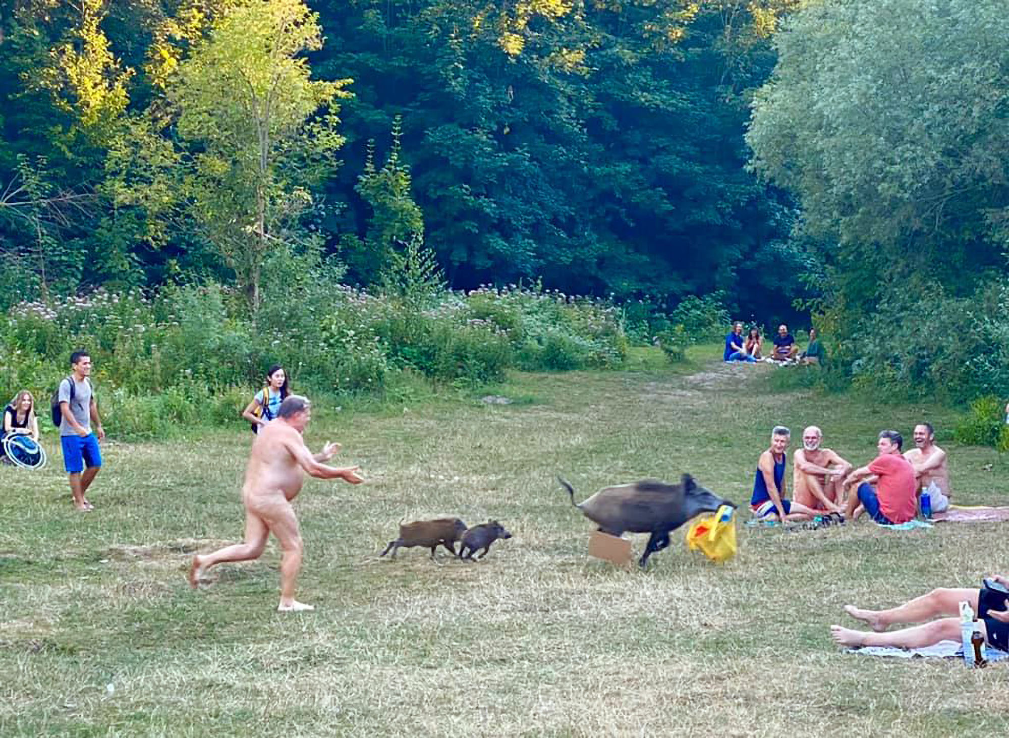VIDEO: Naked man gives chase as wild boar steals bag