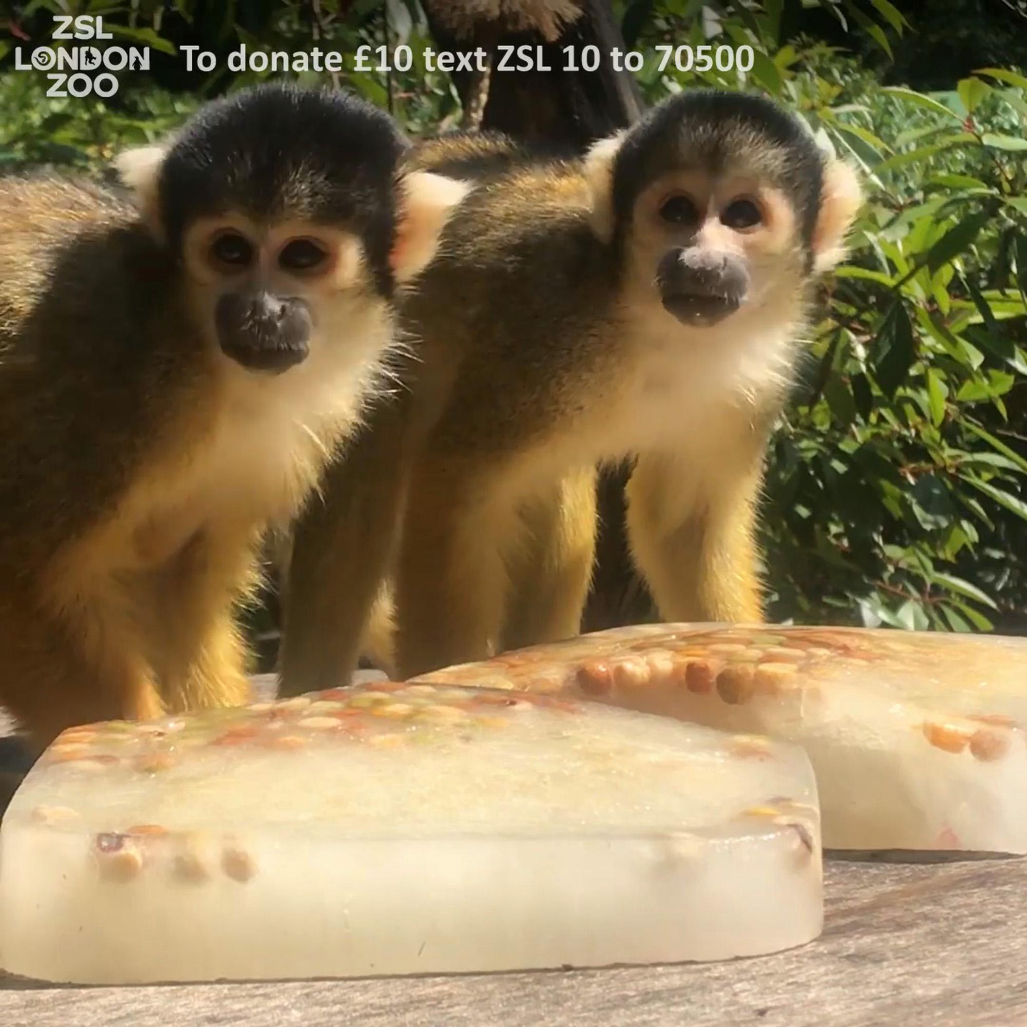 VIDEO: Monkey See Monkey Phew