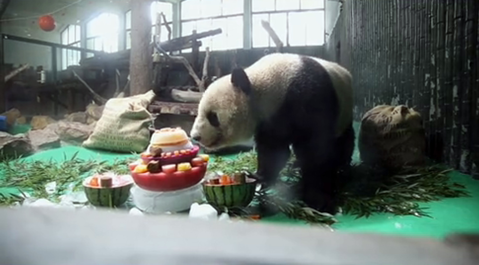 VIDEO: Kung Foodie Panda: Gourmet Birthday Banquet for Fussy Feeder