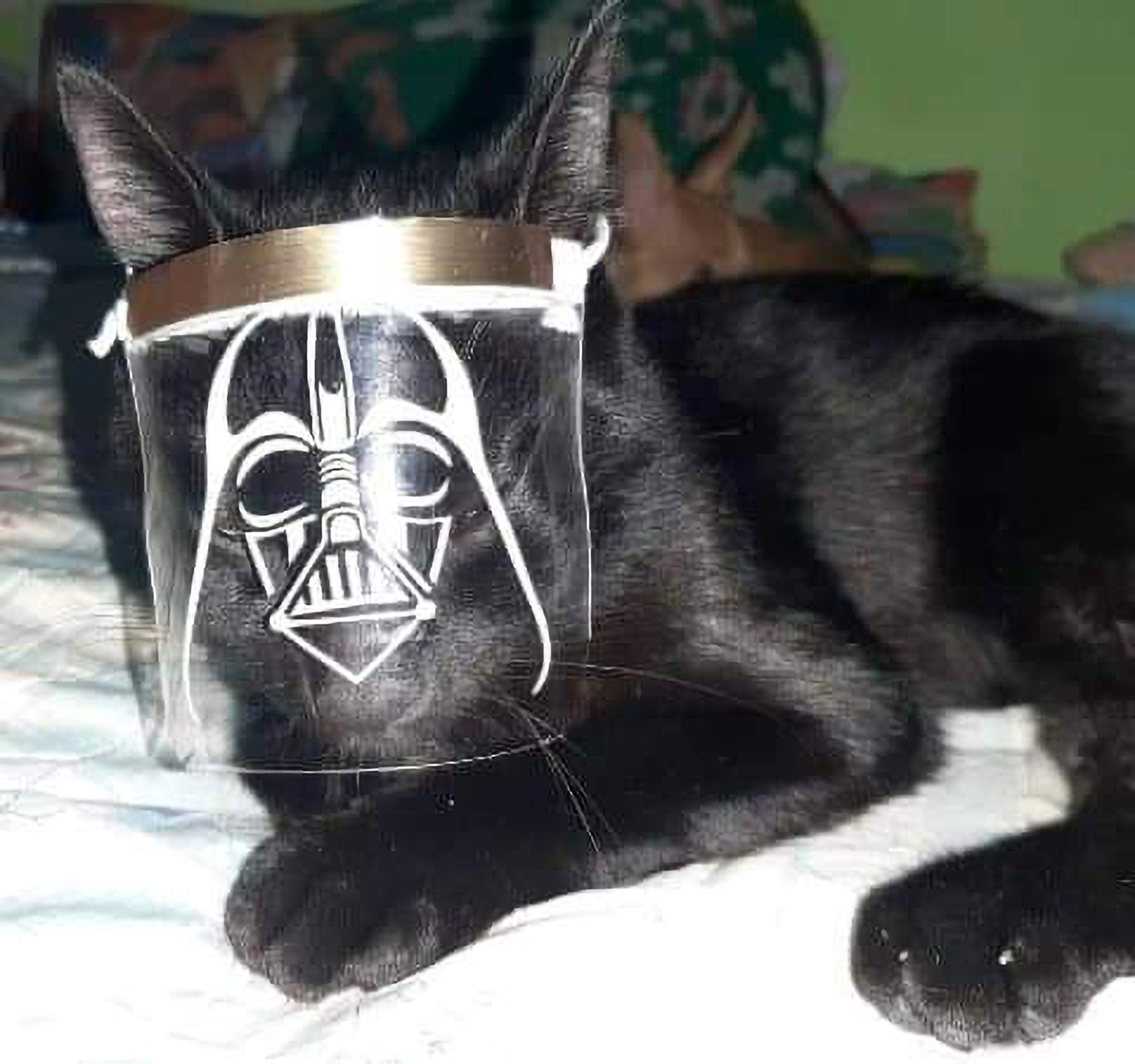 Star Paws: Darth Vader Cat Masks to Shield Pets from COVID-19