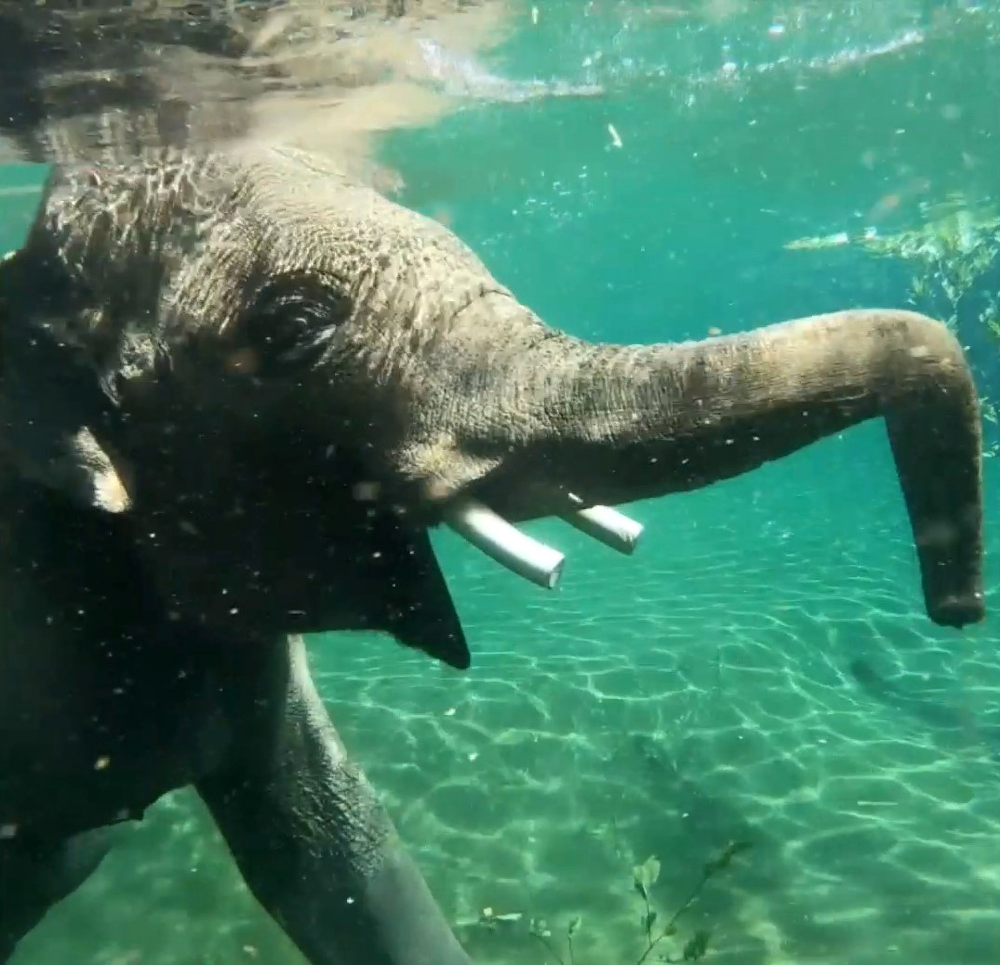 Got Your Trunks? Tusker Splashes Out on World Elephant Day