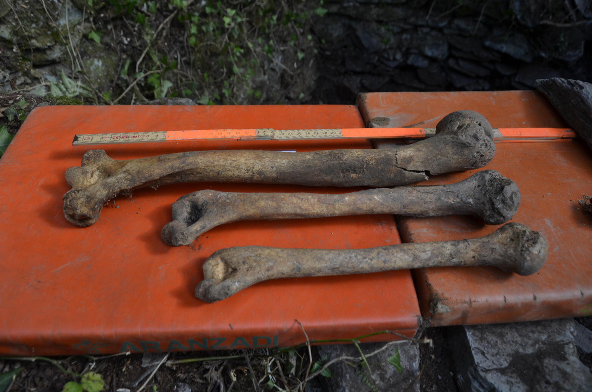 Royal Giant's Bodysnatching Legend was a Tall Tale