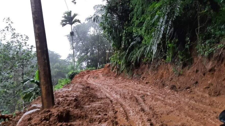 New Road Near Rainforest in Sri Lanka Has Green Activists Up in Arms