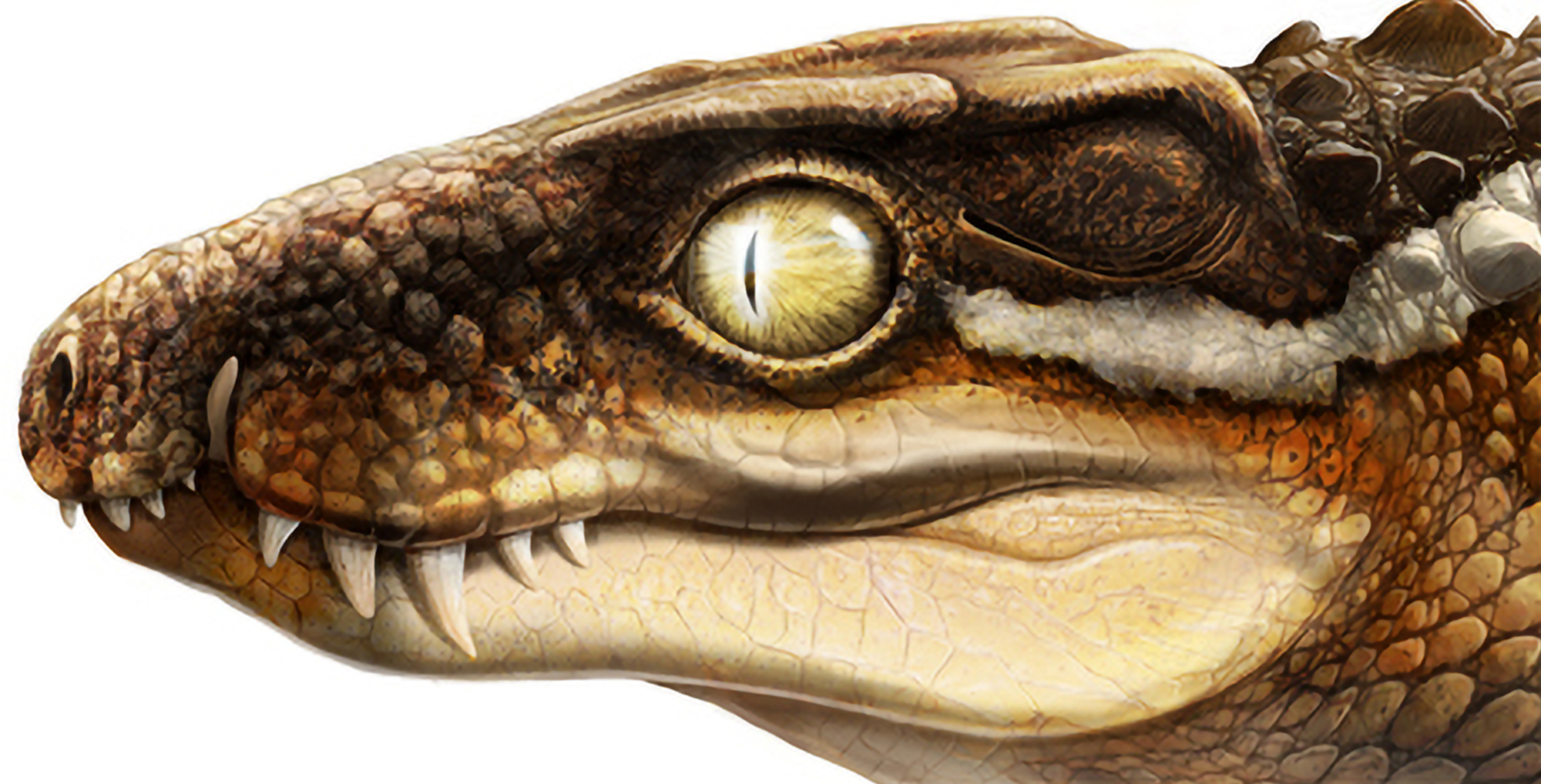 Stolen Fossil Found to Be New Croc Species