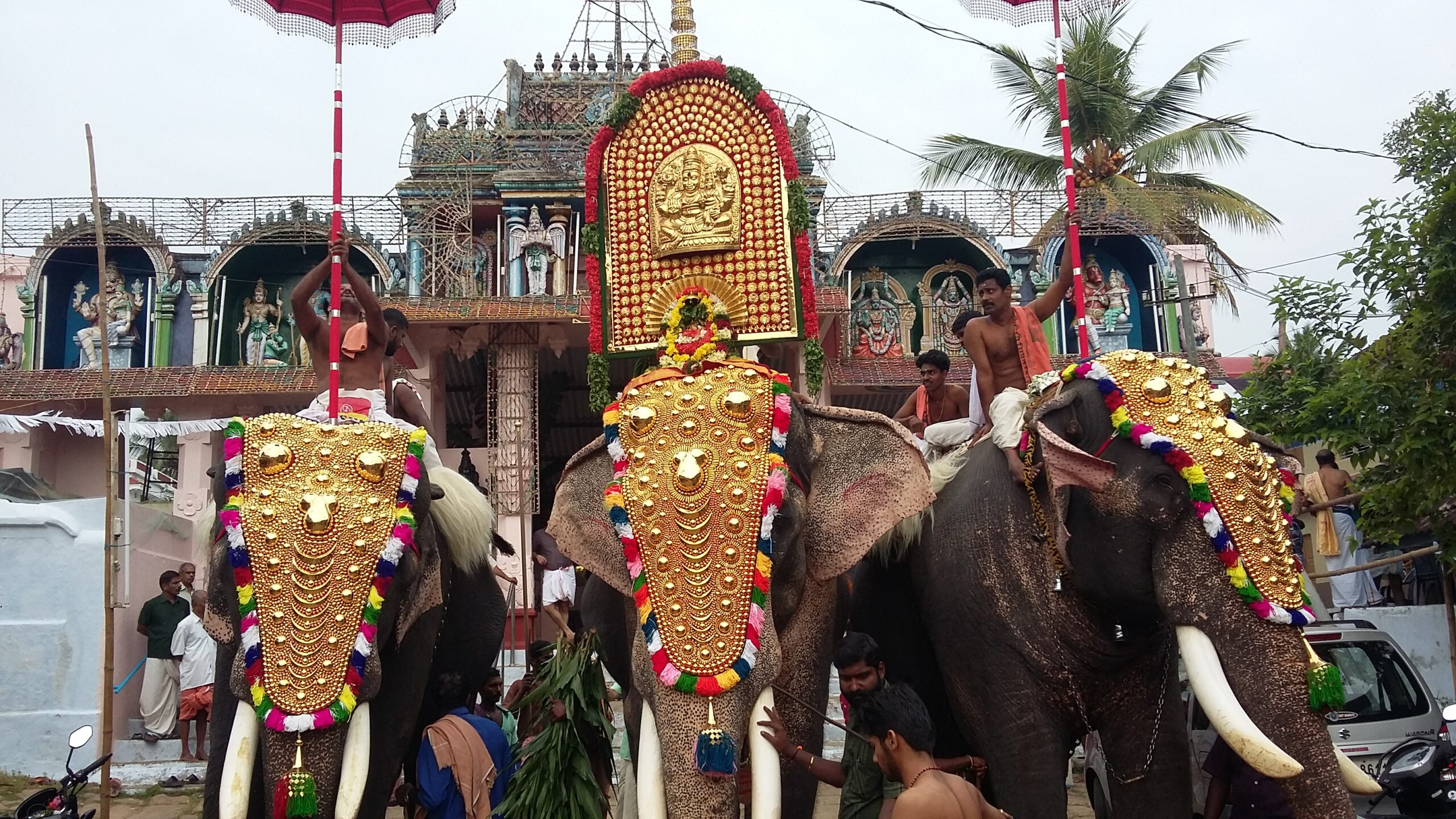 Elephants Are An Integral Part of South India's Navaratri Festivities