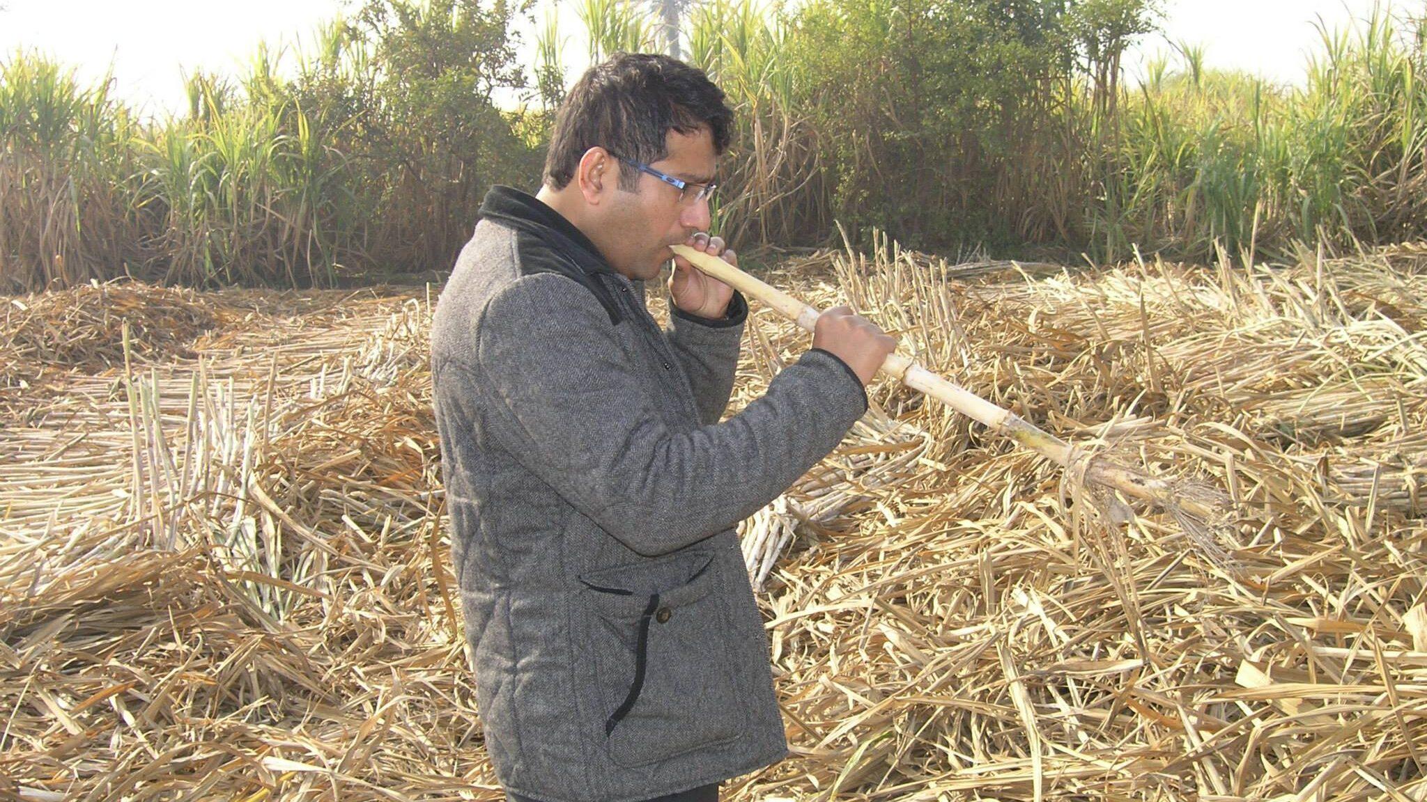 Pakistan Announces Strict Measures to Avoid Wheat, Sugar Crises