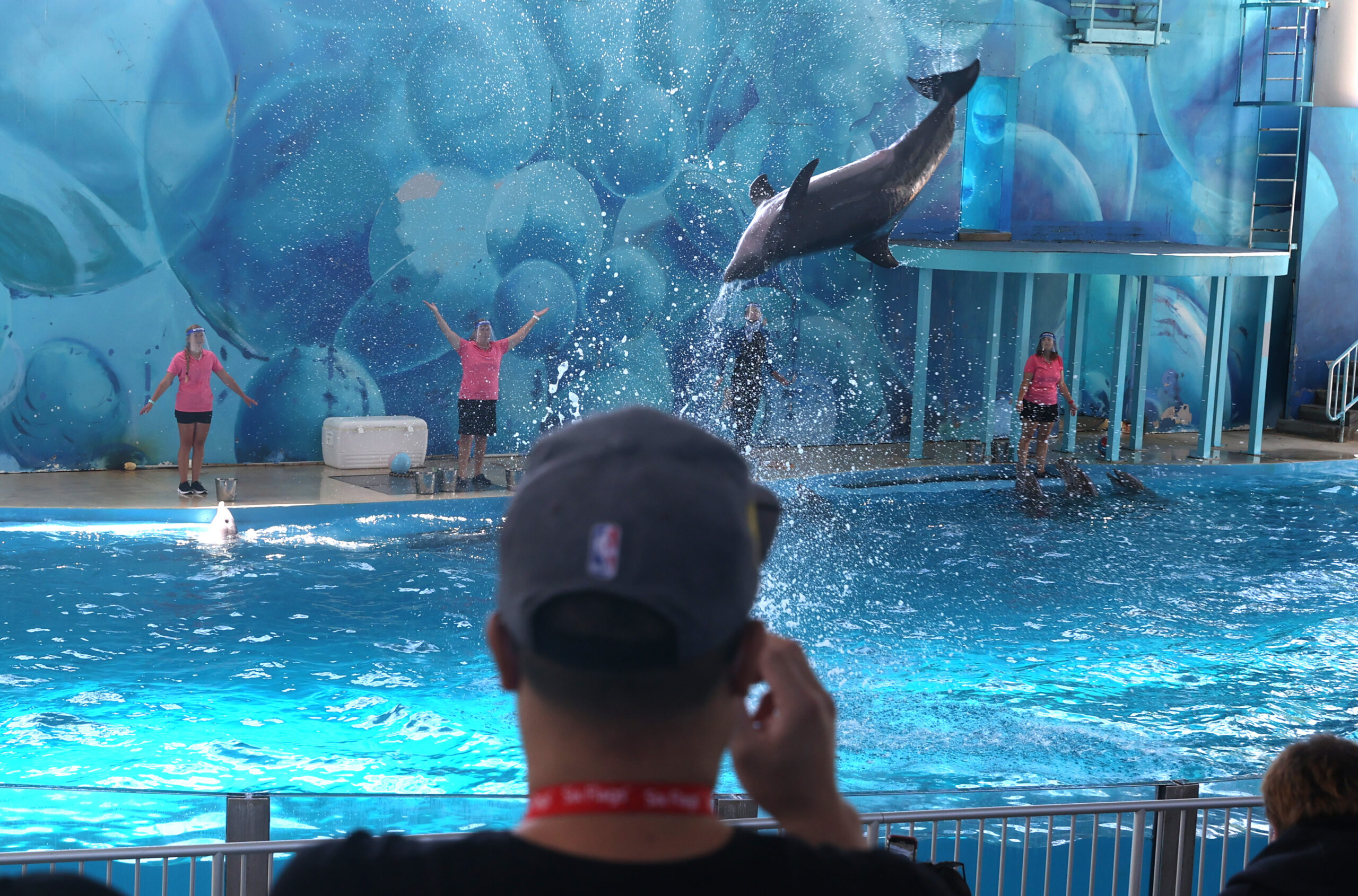 Art-Sea: Dolphins That Help Wounded Vets Learn to Paint