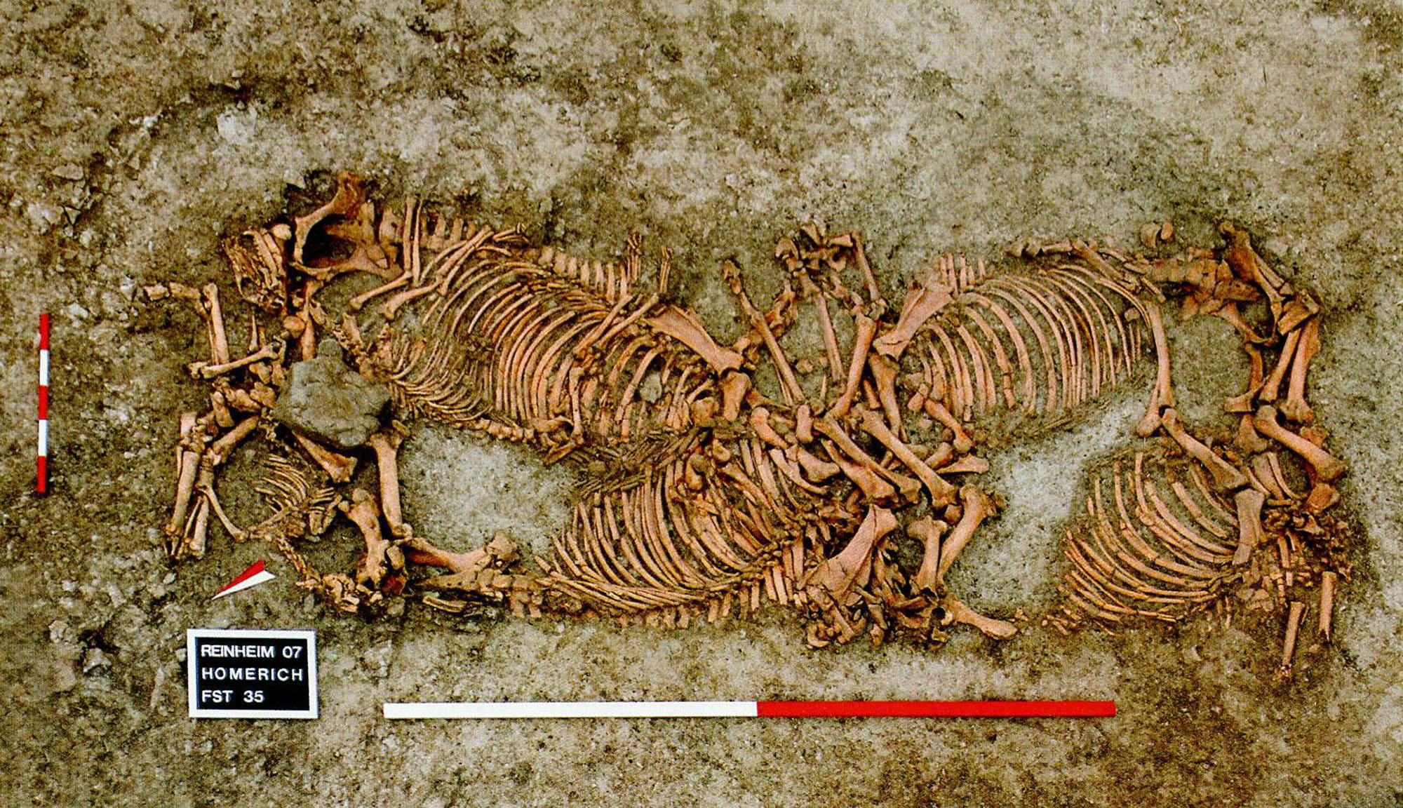 Headless Horses In Prince's Grave Go On Display