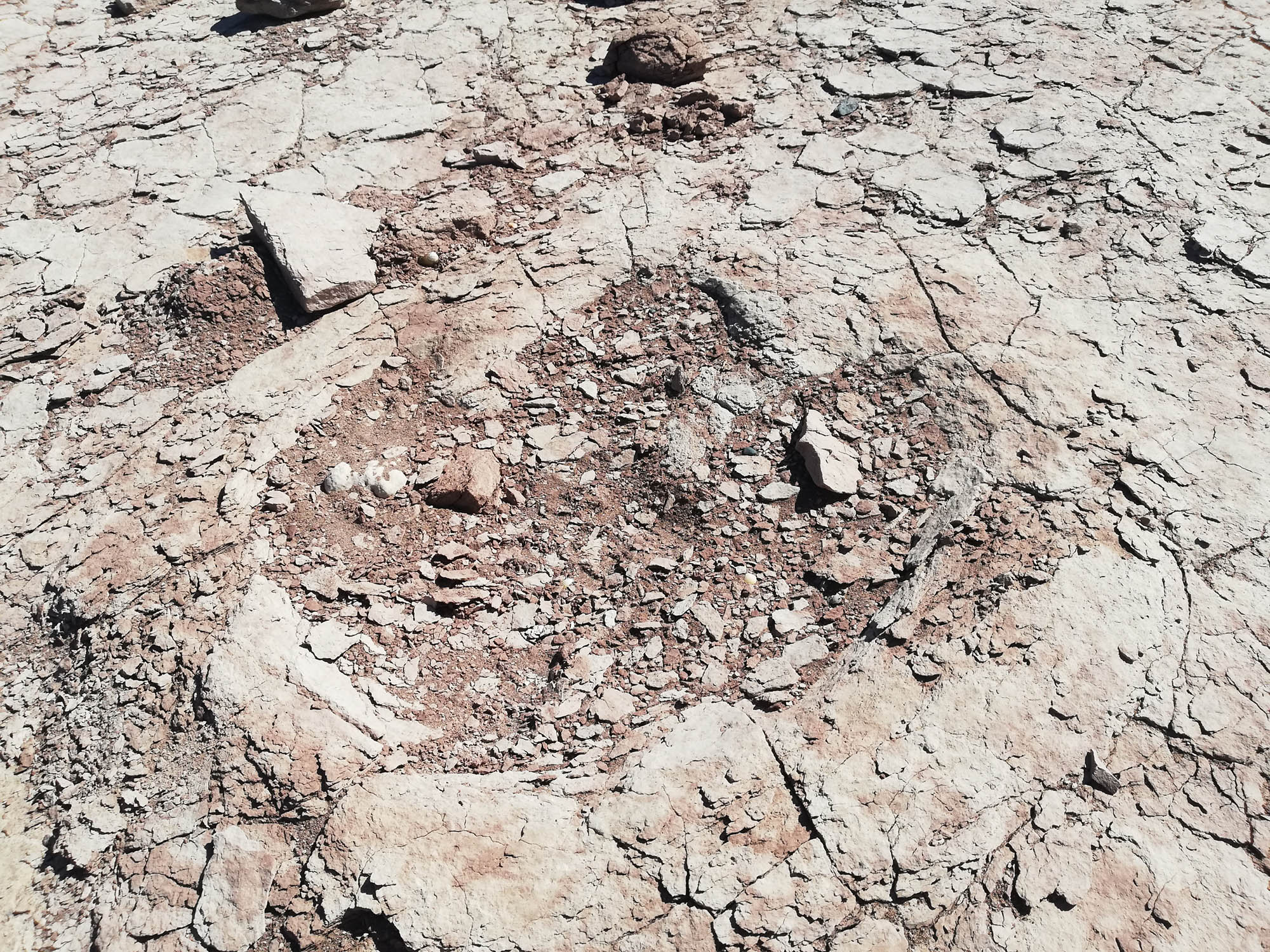 100 Million-Year-Old Dinosaur Footprints Found in Argentina Reservoir
