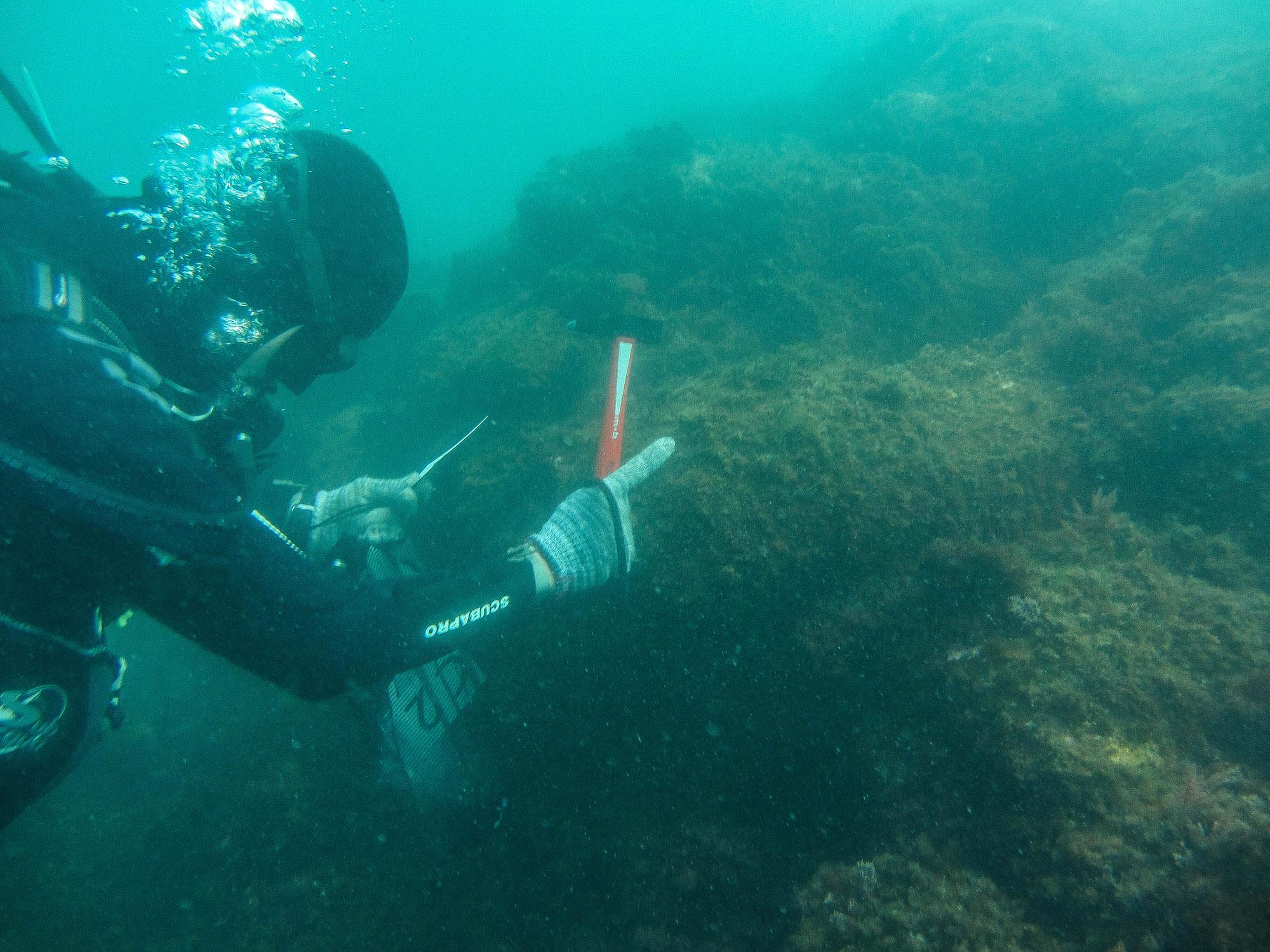 19th-Century British Shipwreck Found off French Coast