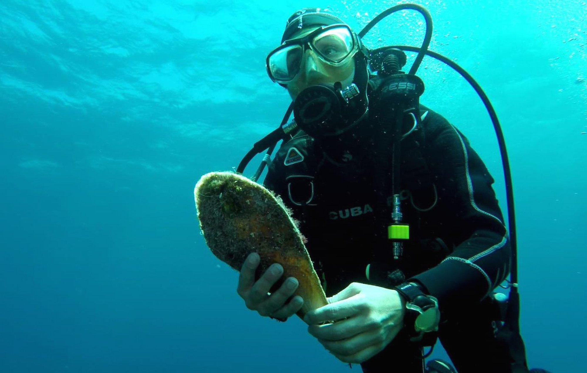 Exotic Fan Mussels Saved From Extinction