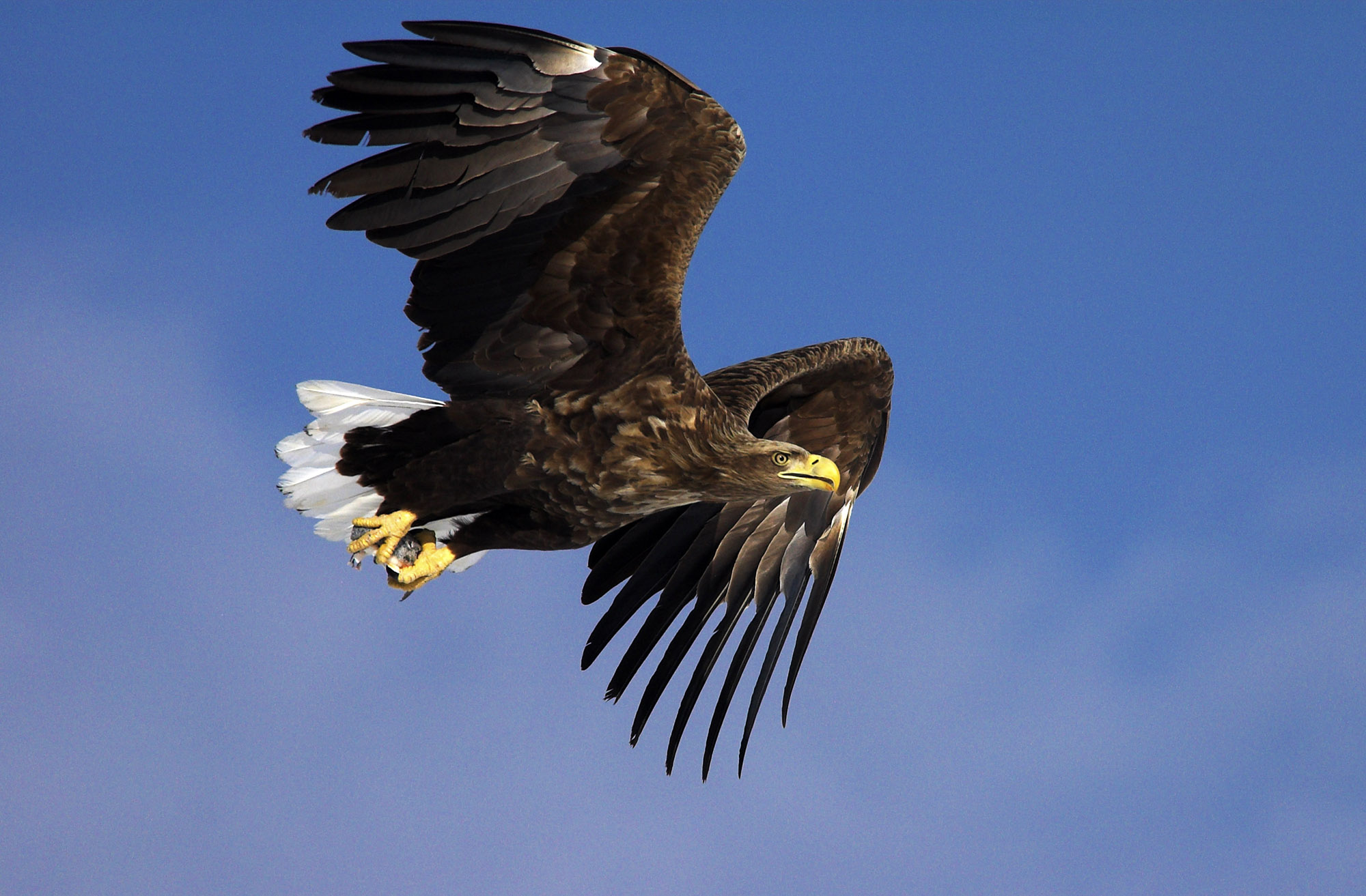 Meet the Eagle Whose GPS Tracker Captured Her Epic 1,800-Mile First Flight