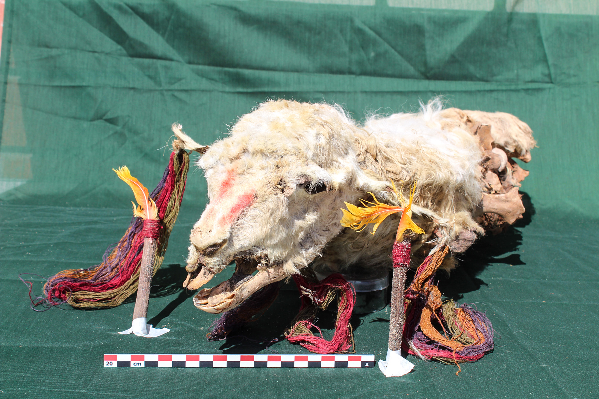 Mummified Llamas Shed New Light On Inca Rituals
