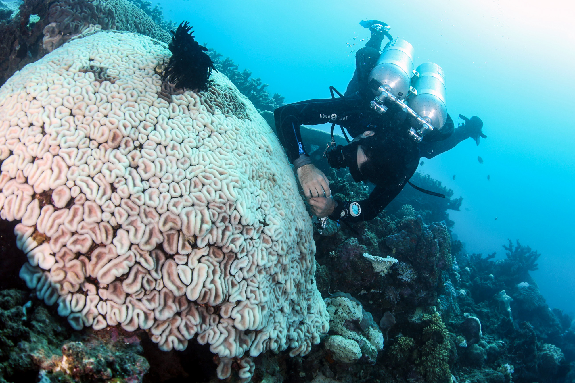 Coral Expert Hopes To Map The Ecosystem's DNA and Save Dying Reefs