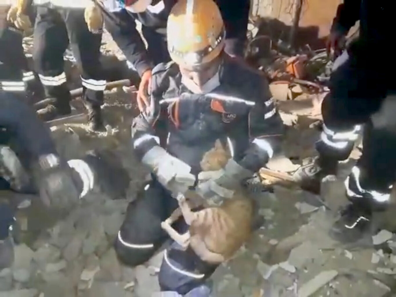 Rescue Workers Save Cats, Humans Trapped Under Earthquake Rubble