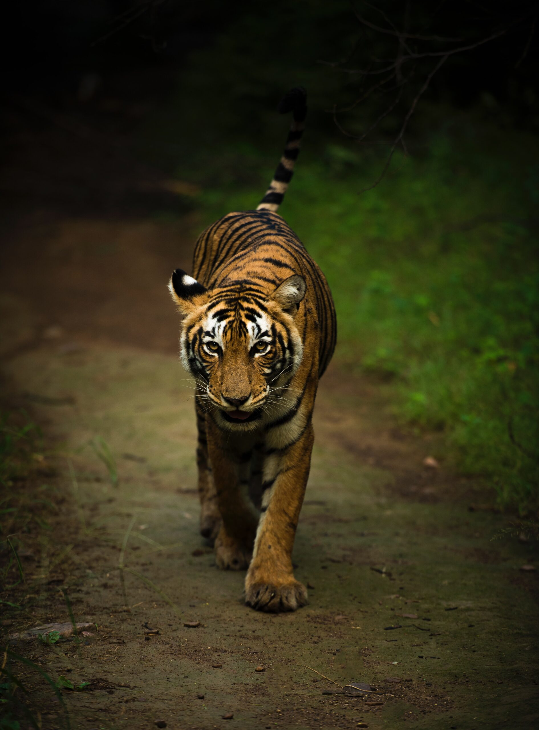 India's Panna Tiger Reserve Joins List of UNESCO Biosphere Reserves