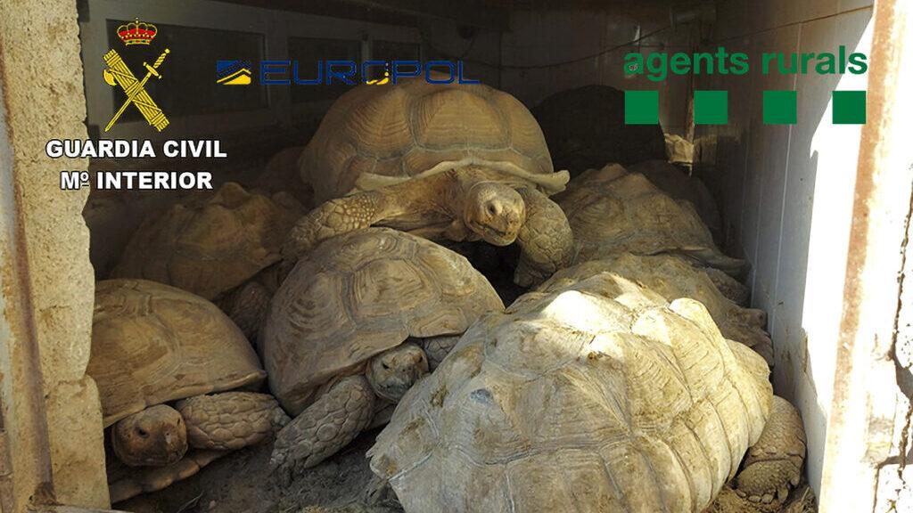 Spanish Police Break Up Criminal Groups Illegally Trafficking Exotic Animals
