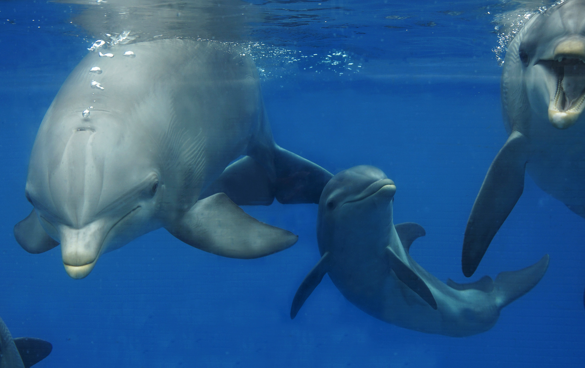 Spanish Aquarium Shows Off Baby Dolphin