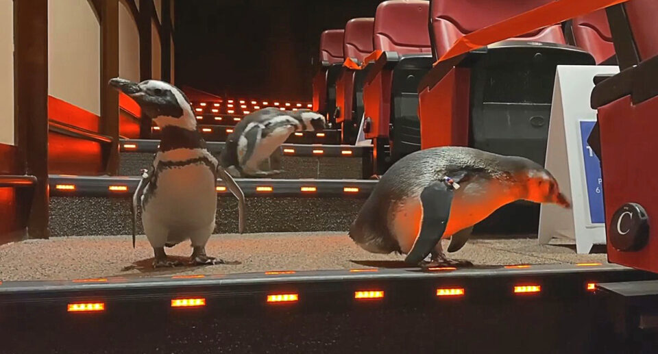 Chicago Penguins Go to the Theater