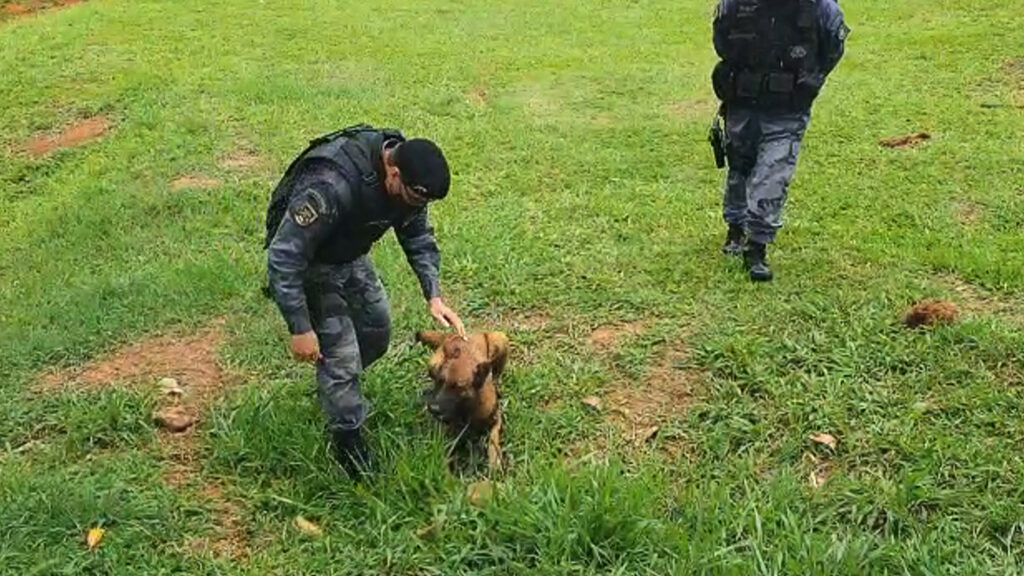 Brazilian Police Dog Sniffs Out Cemetery Drug Stash