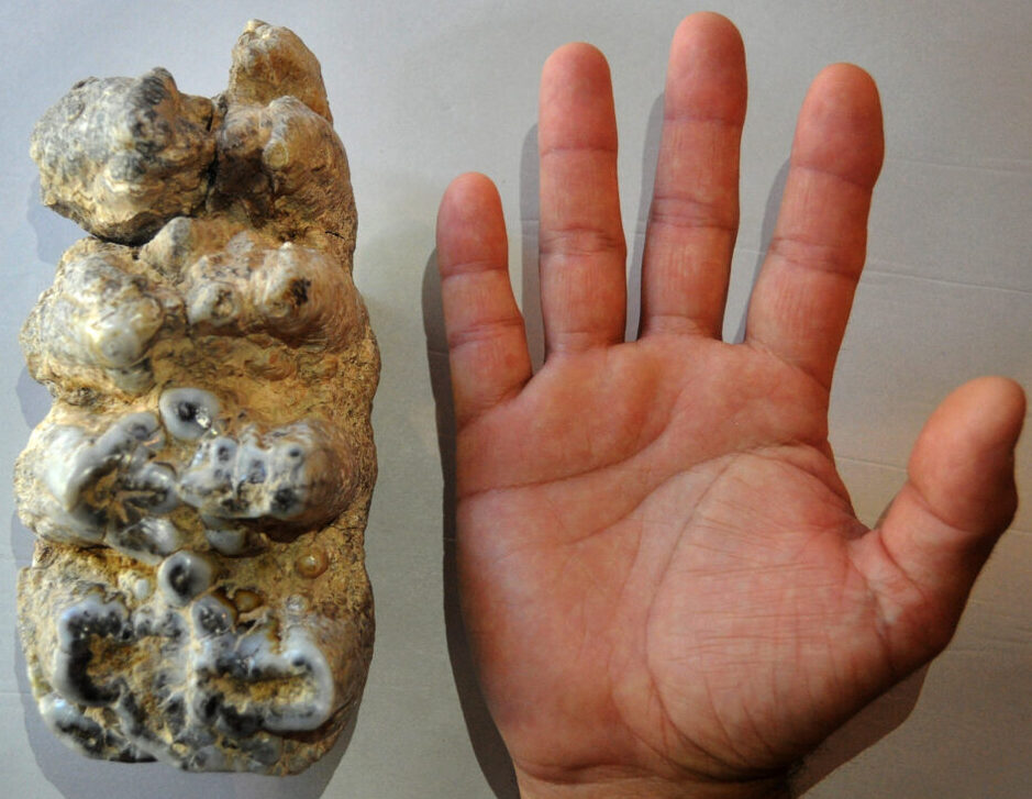 The Whole Tooth: Giant Mastodon Unearthed After Family Finds Ancient Molar