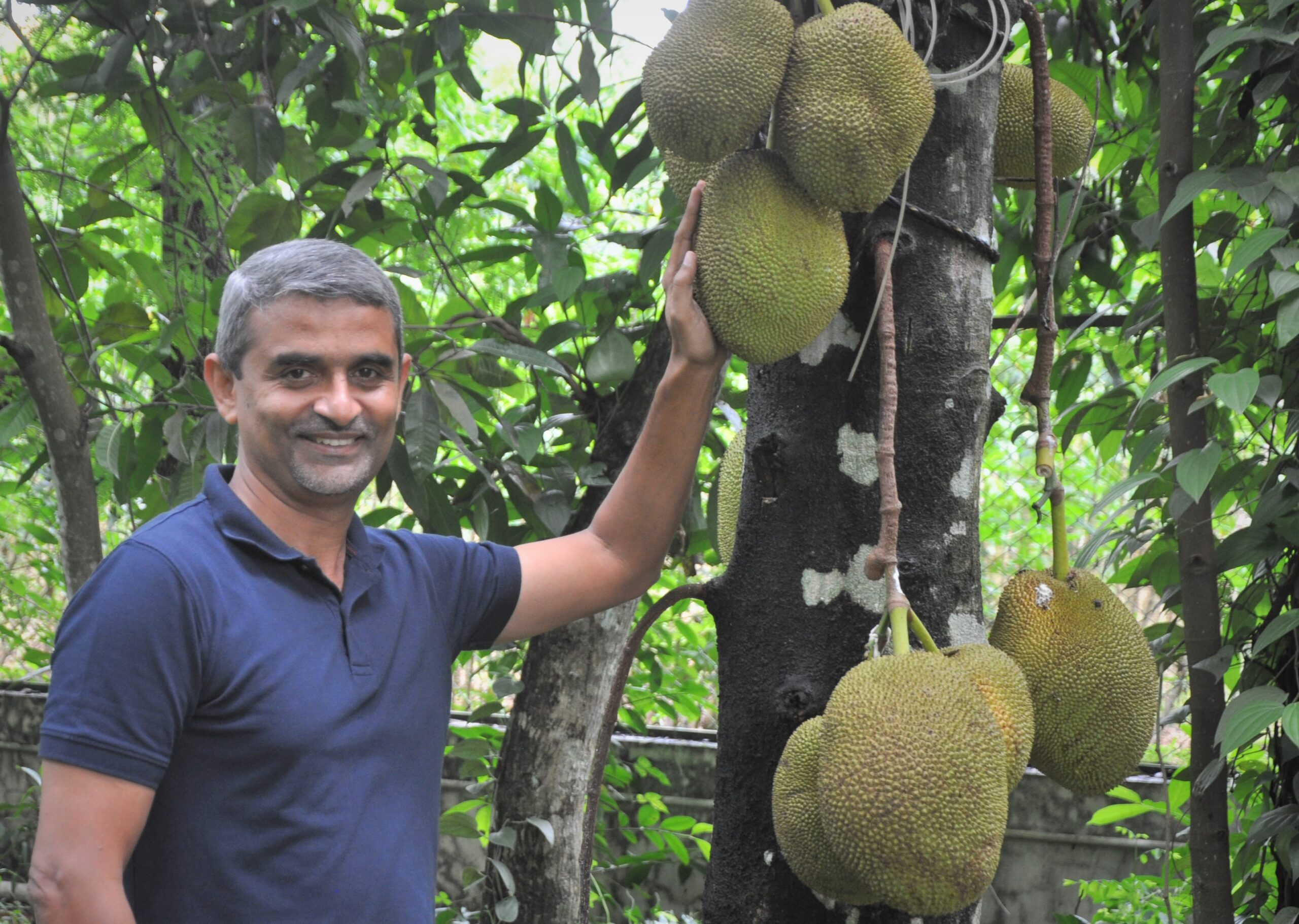 Green Jackfruit Flour Helps Lower Blood Sugar in Diabetics