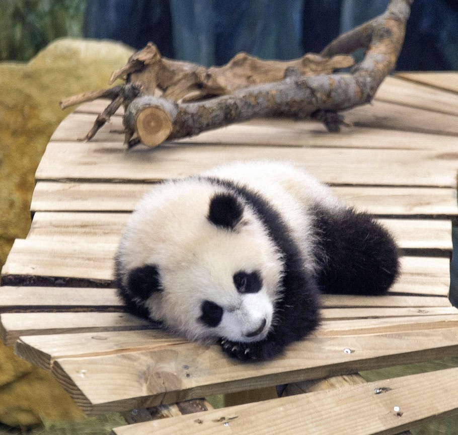 Panda Zoo Holland