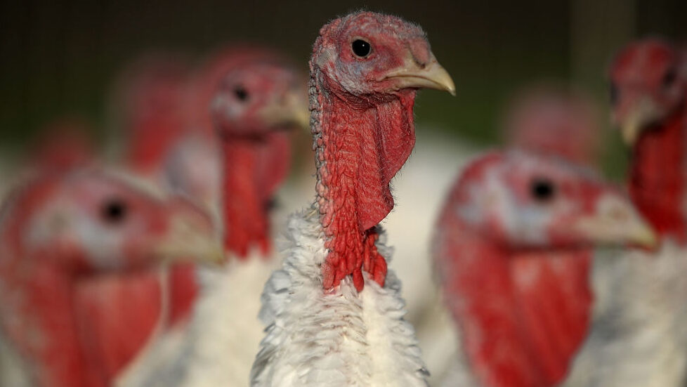Smarter News Quiz: Thanksgiving Edition