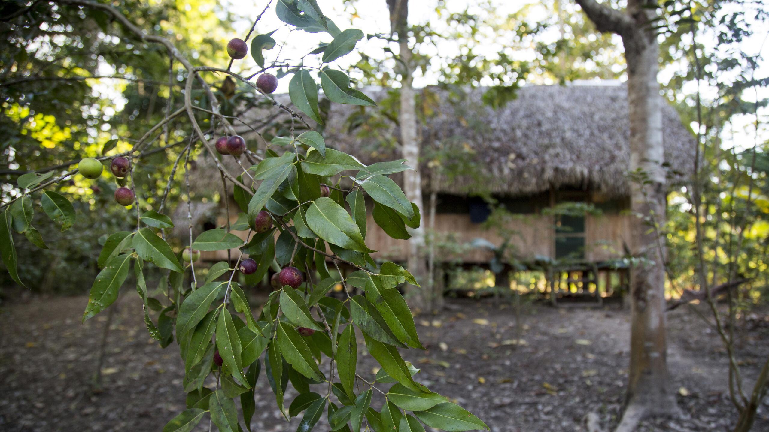 El misterio de la ayahuasca: ¿Qué hay en el viaje espiritual?