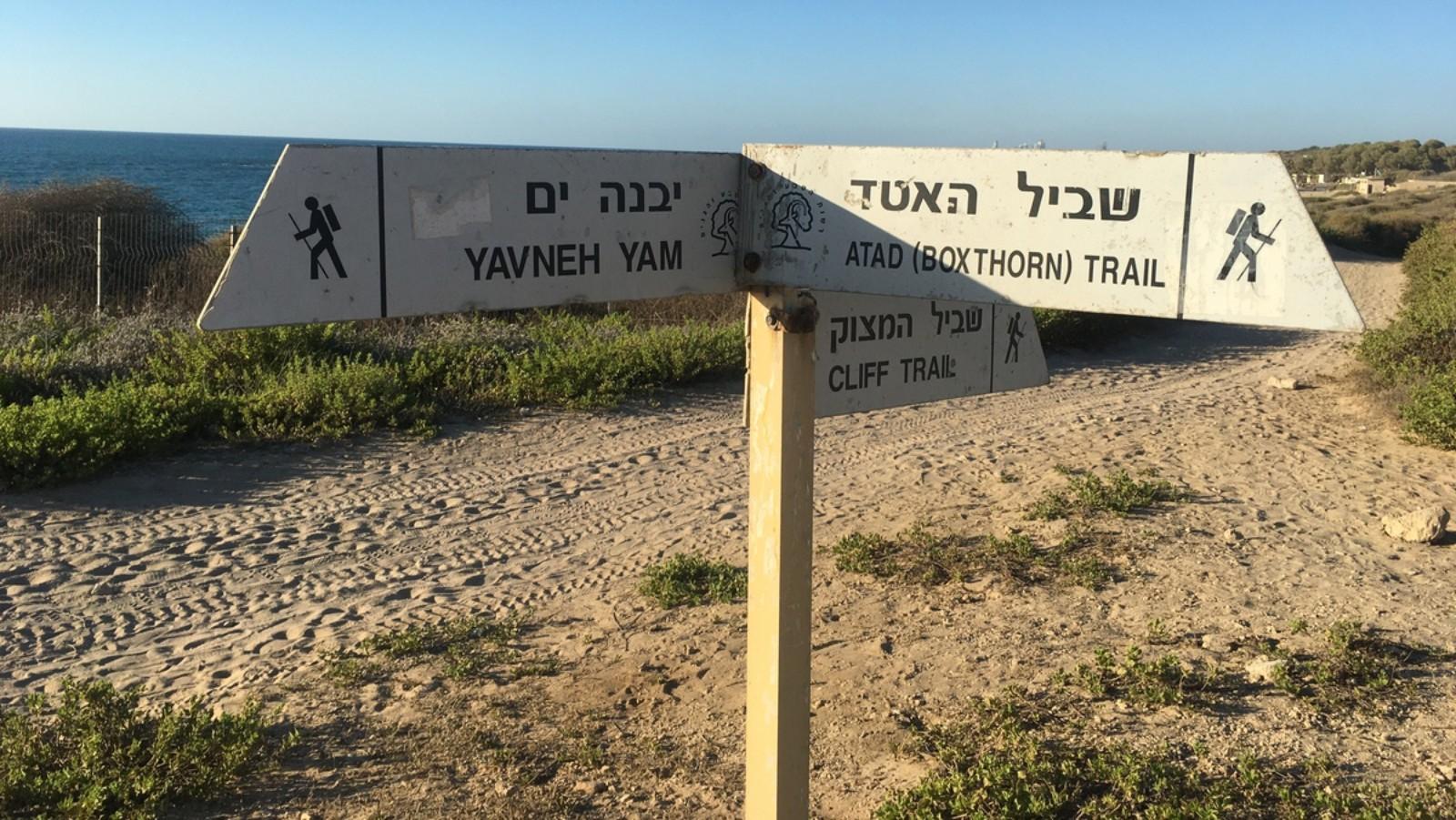 Top 10 Boardwalks and Beach Hikes in Israel