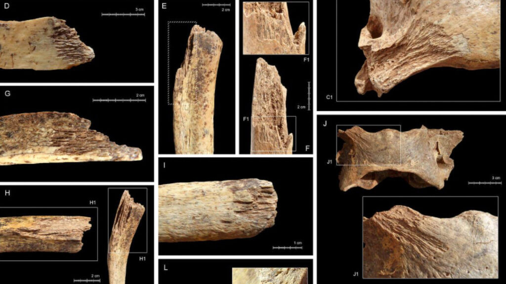 Grizzly End: Prehistoric Bears Were Cannibals