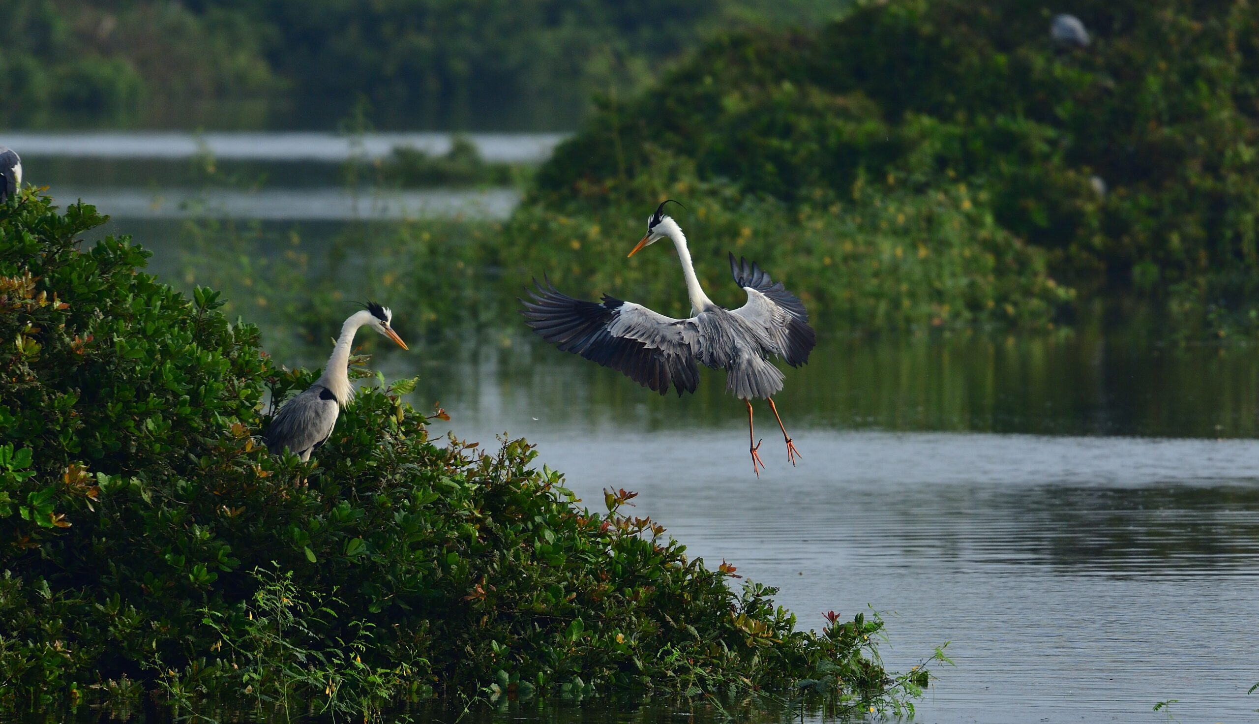 Delayed Winter Monsoon Gives Anxious Moments to Tamil Nadu Birdwatchers