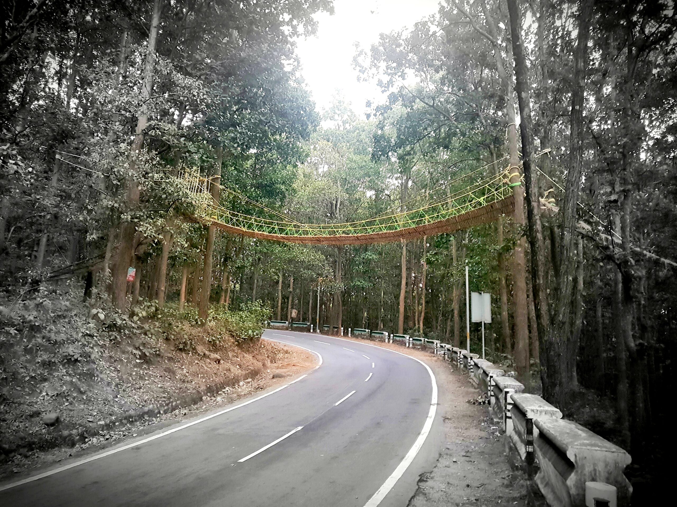 A Bridge to Help Reptiles Cross a Busy Forest Road