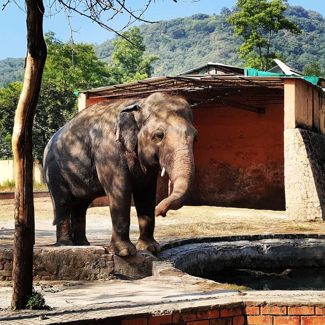 'Lonely' Elephant Kaavan Moves to Cambodia from Controversial Islamabad Zoo