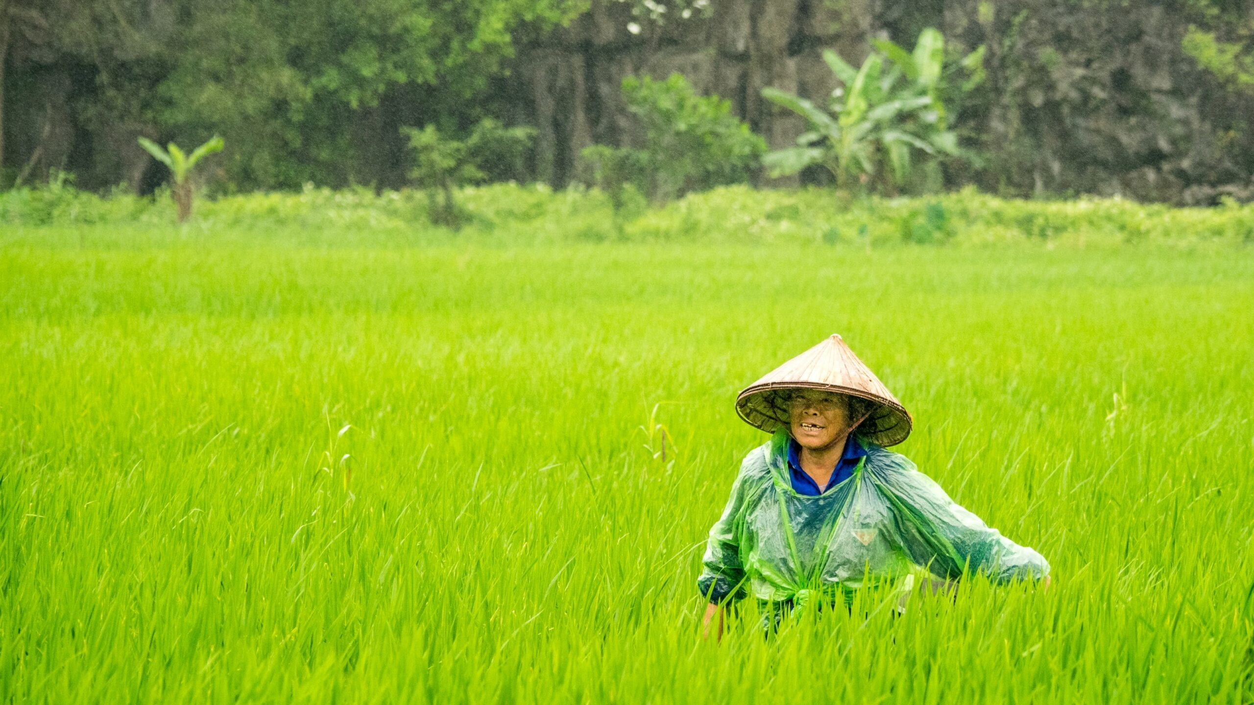 China to Import Rice from India for First Time in Decades