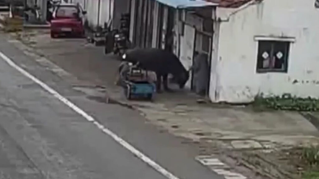 VIDEO: Elderly Man Fights Off Escaped Bull With a Broom