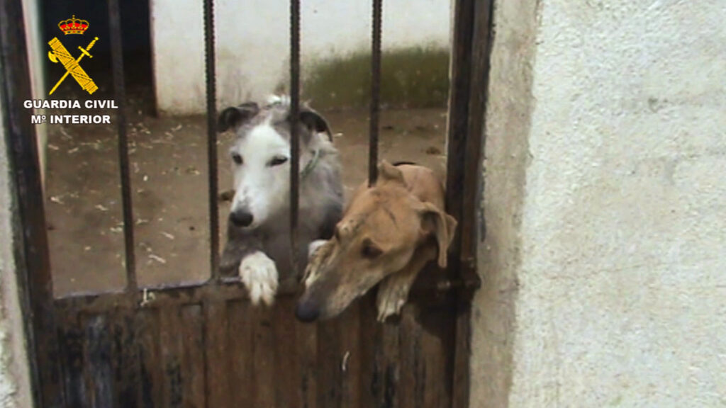 Spanish Authorities Rescue 100 Dogs From Illicit Kennel And Arrest Owner