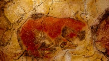 Bison in the cave of Altamira (Pedro Saura-Museo Altamira/Real Press)