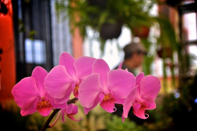 Los cuidados de las hermosas orquídeas