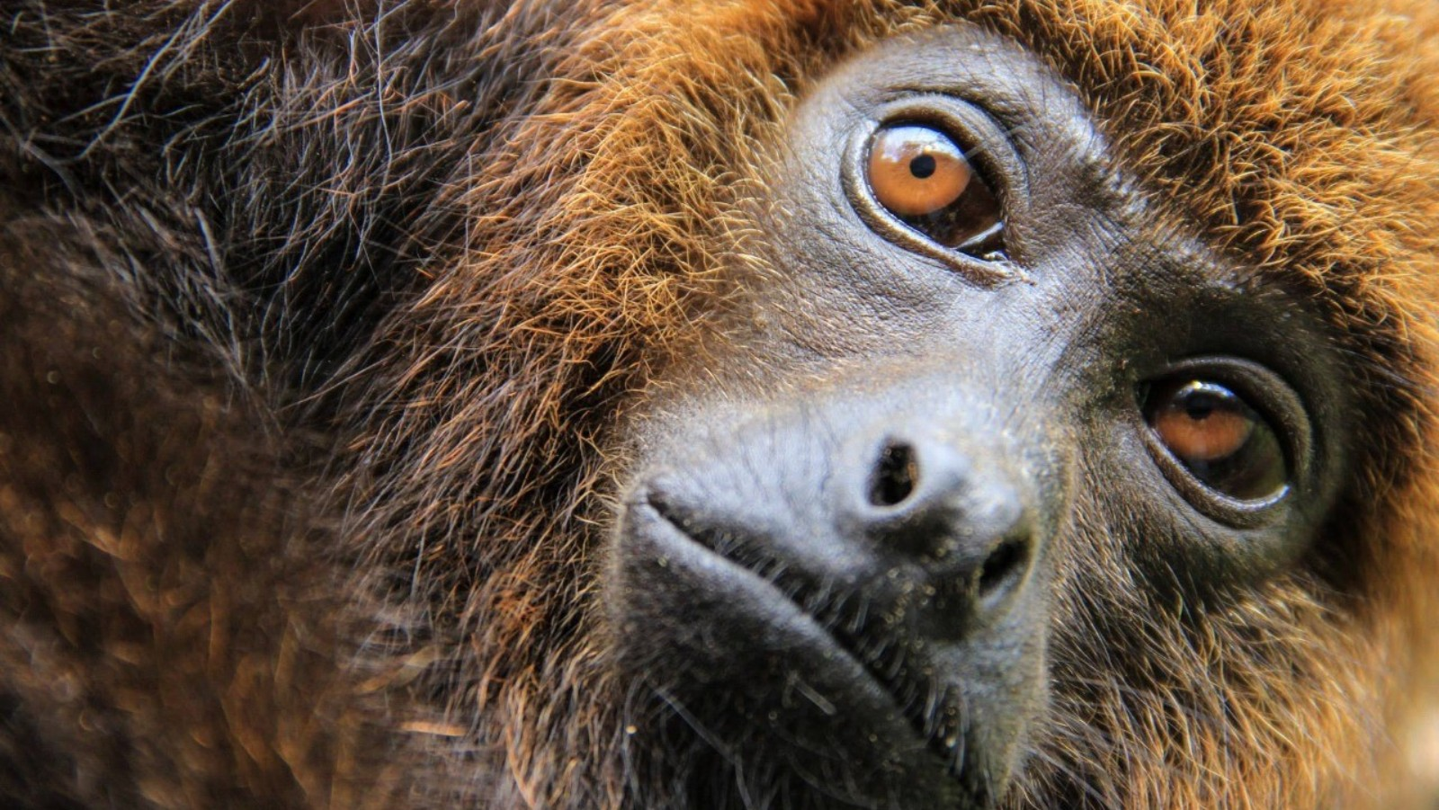 Conservation Nonprofit to Buy and Protect Land in Kenya and Brazil