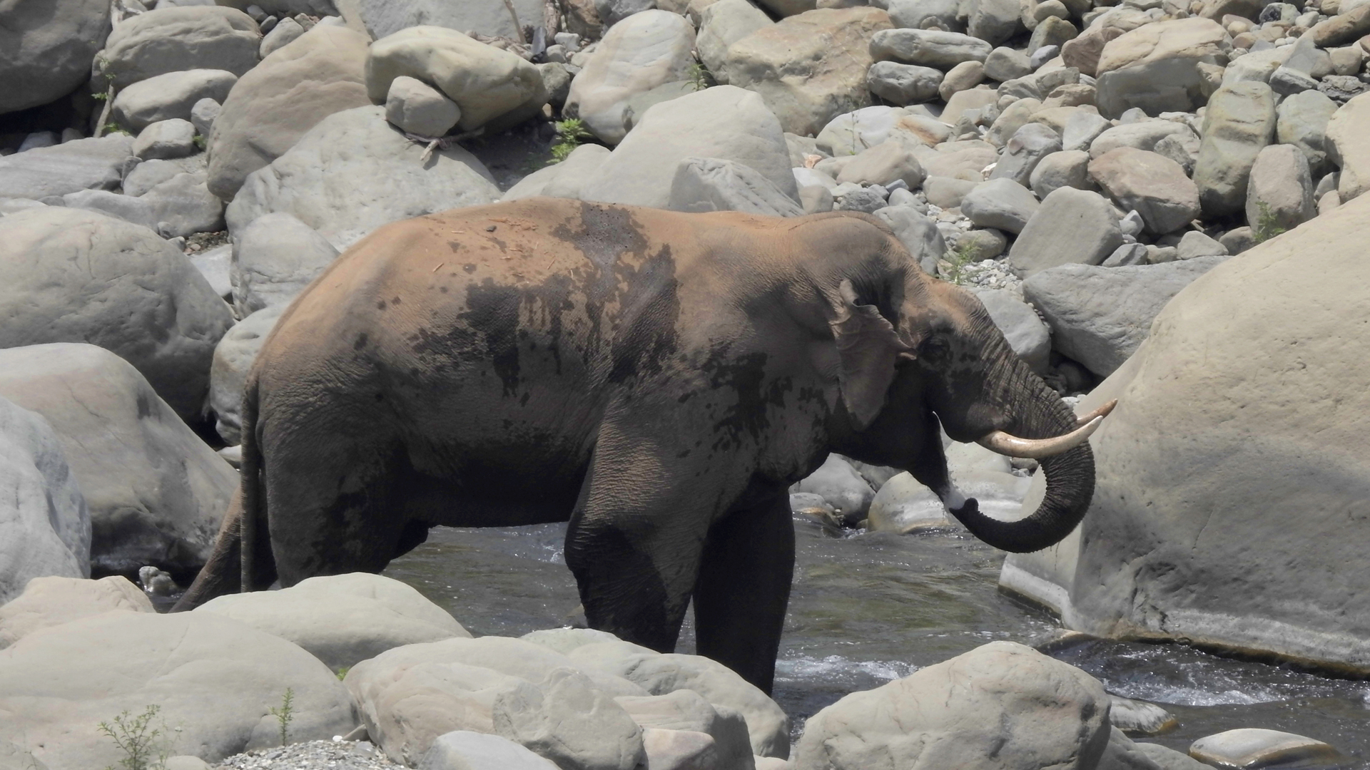 Sub-Himalayan Farmers Distressed With Move To Derecognize Elephant Reserve