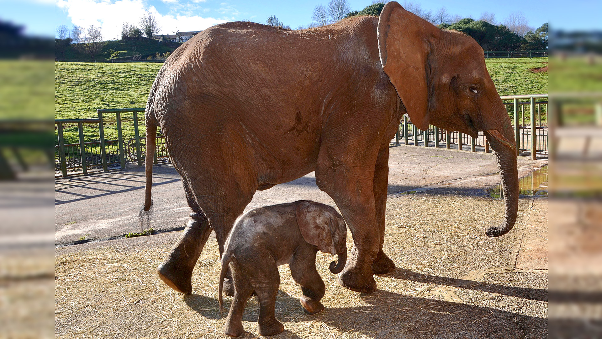 VIDEO: Baby Elephant Marks First 3rd Generation Birth In Spain