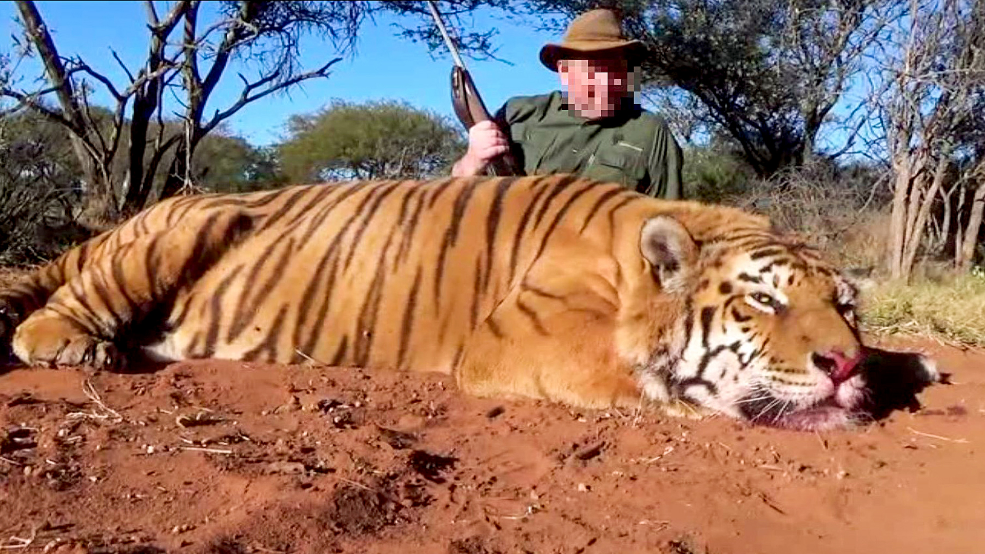 Slovak Hunter Faces Jail For Killing Endangered Tiger And Importing It Home - Zenger News